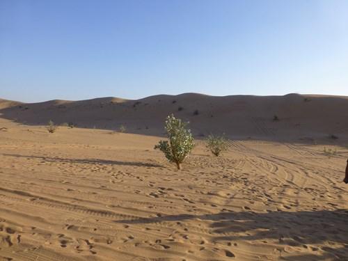 ドバイ・ルブアルハリ砂漠