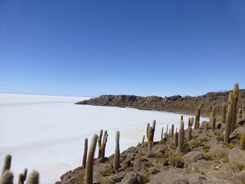 ウユニ塩湖のインカワシ島