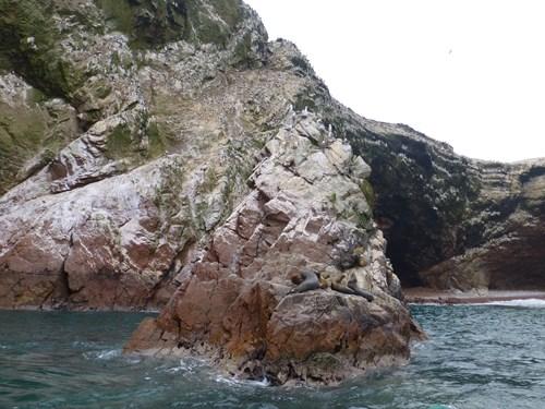バジェスタ諸島の海鳥