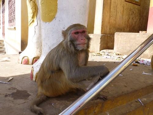 ポッパ山のタウン・カラッ付近にいる猿