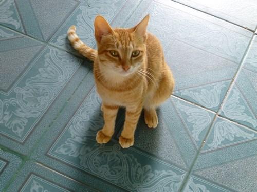 ポッパ山のタウン・カラッの頂上に住む猫