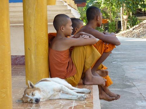 カンボジア・ロリュオス遺跡群のロレイに住む子供の僧侶と眠る犬