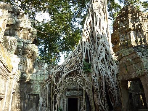 カンボジア・アンコールトムにあるバイヨンの遺跡に食い込むガジュマルの木