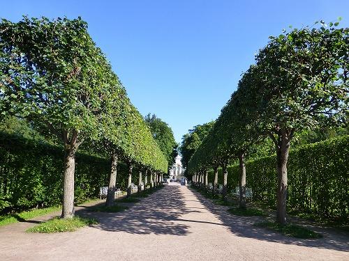 ロシア・サンクトペテルブルクのエカテリーナ公園の並木道