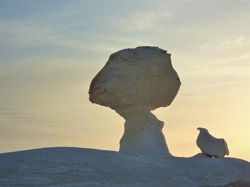 エジプト西方砂漠の白砂漠のマッシュルーム&ヒヨコ型の岩