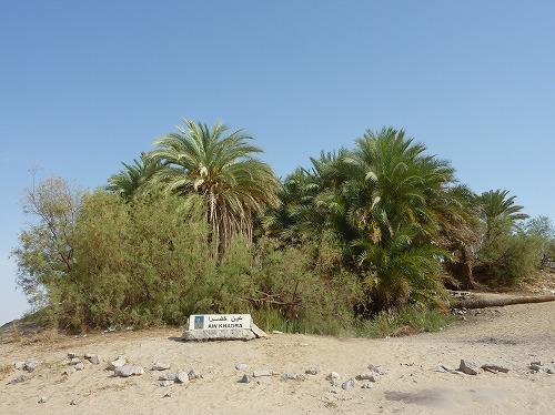 エジプト西方砂漠のオアシス