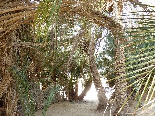 エジプト西方砂漠のオアシス内部
