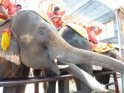 タイ・アユタヤ遺跡の象