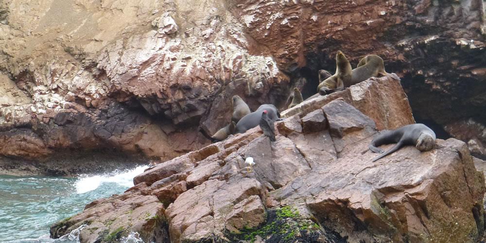 バジェスタス島はリトル・ガラパゴスと呼ばれる大自然!リマから現地 ...