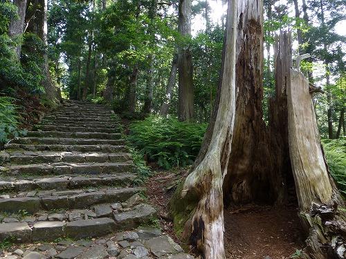 大門坂にある巨木