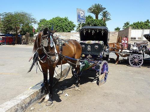 エジプト・ルクソールを走る観光馬車