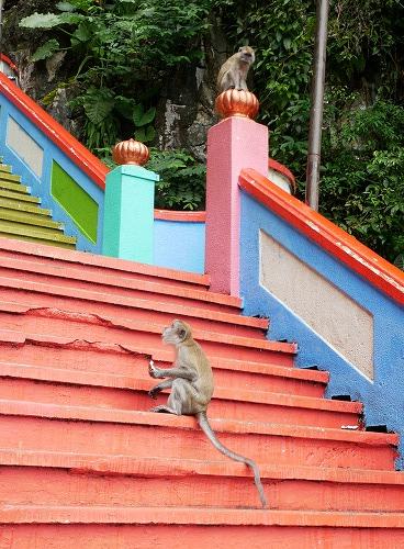 マレーシア・バトゥ洞窟への階段でたむろする猿たち
