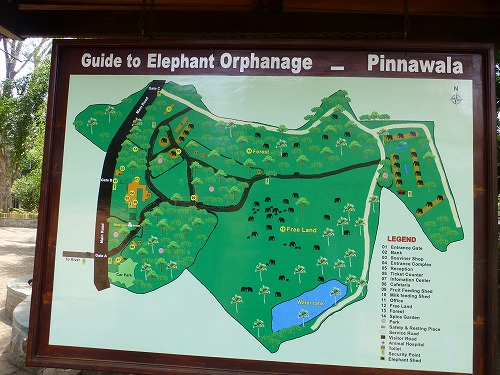 スリランカ・ピンナラワの象の孤児院 院内の案内図